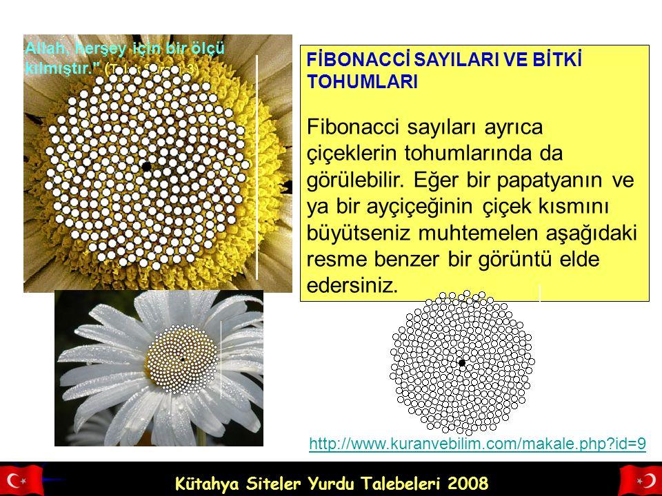 Kütahya Siteler Yurdu Talebeleri 2008 Allah, herşey için bir ölçü kılmıştır. ( Talak Suresi, 3) FİBONACCİ SAYILARI VE BİTKİ TOHUMLARI Fibonacci sayıları ayrıca çiçeklerin tohumlarında da görülebilir.