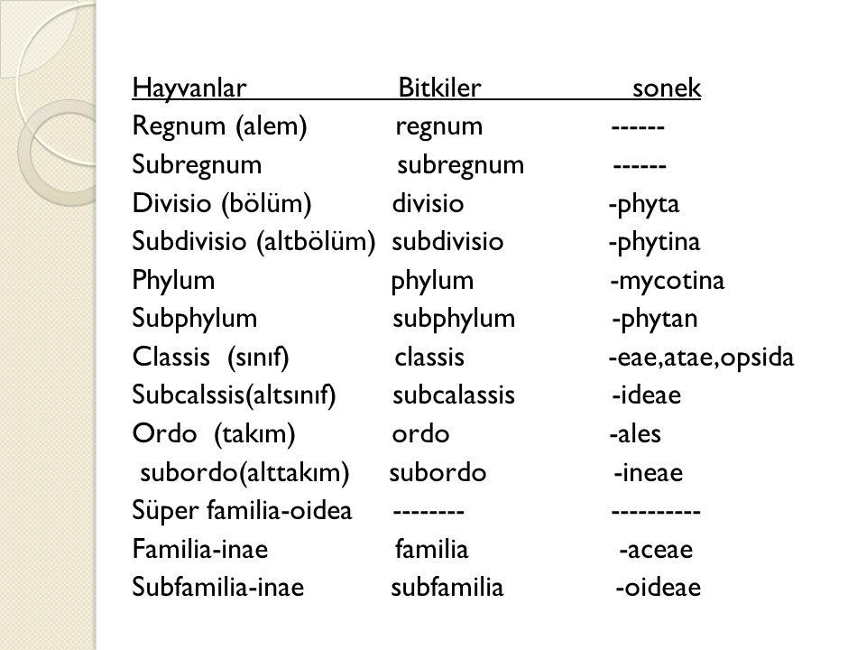 Hayvanlar Bitkiler sonek Regnum (alem) regnum ------ Subregnum subregnum ------ Divisio (bölüm) divisio -phyta Subdivisio (altbölüm) subdivisio -phytina Phylum phylum -mycotina Subphylum subphylum -phytan Classis (sınıf) classis -eae,atae,opsida Subcalssis(altsınıf) subcalassis -ideae Ordo (takım) ordo -ales subordo(alttakım) subordo -ineae Süper familia-oidea -------- ---------- Familia-inae familia -aceae Subfamilia-inae subfamilia -oideae