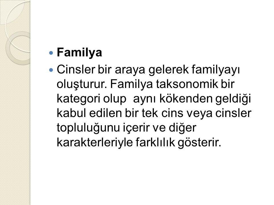 Familya Cinsler bir araya gelerek familyayı oluşturur.