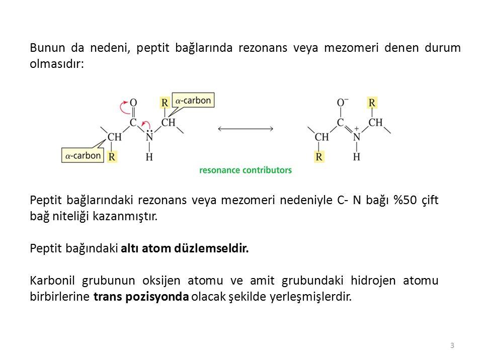 Çift bağların eksen etrafında dönmeleri sınırlı olduğundan, peptit bağı oluşumuna katılan grupların atomları (3C, O, N ve H atomları) bir düzlemde bulunurlar; peptit bağı, rijit ve düzlemseldir: 4 Peptit bağının iki yanındaki α-karbon atomlarının tek bağ etrafında dönüş yapmalarının sonucu olarak polipeptit zincirde art arda gelen küçük peptit düzlemleri aynı düzlemde bulunmazlar:
