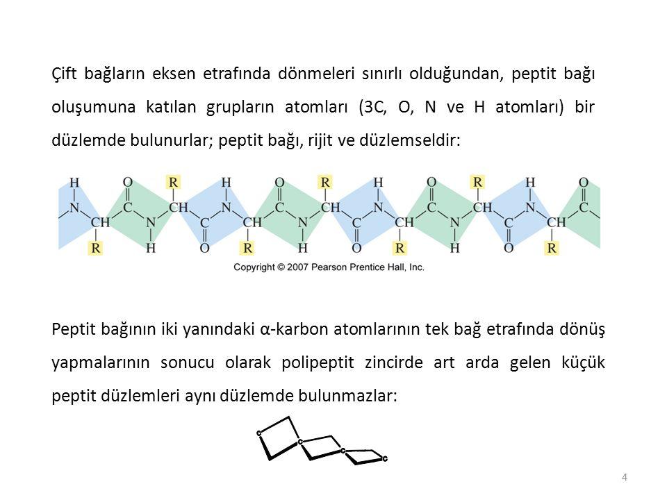 25 Bir proteinin tersiyer (üçüncü) yapısı Bir proteinin tersiyer (üçüncü) yapısı, polipeptit zincirinin, sekonder yapı oluşumundan sonra, daha önce açıklanan bağlayıcı güçlerin hepsinin toplamı ile uzayda daha ileri katlanmalar, kıvrılmalar yapar ve tersiyer yapı oluşur.
