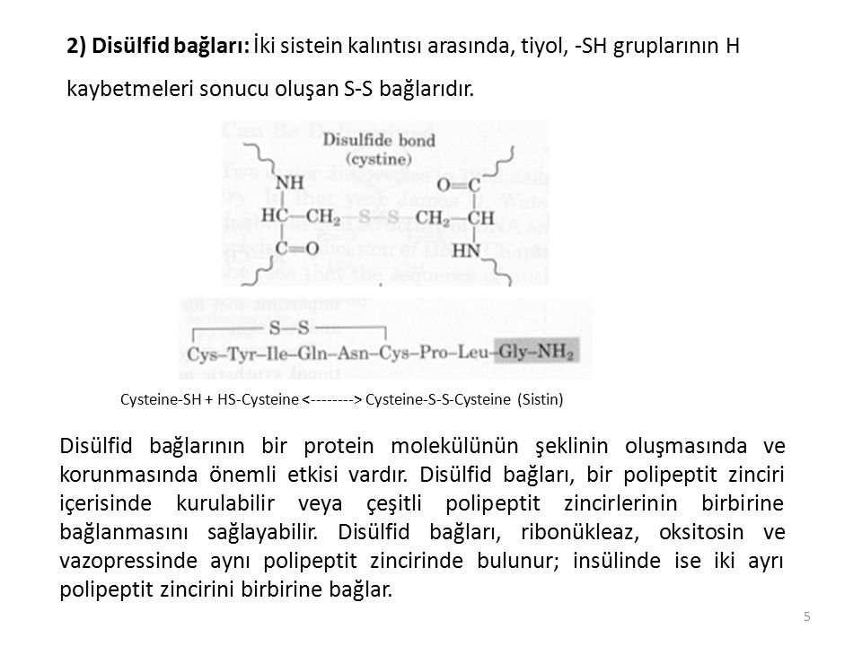 3) Hidrojen bağları: Polipeptit zinciri oluşturan peptit bağlarındaki rezonans veya mezomeri durumundan dolayı, oksijenlerin bilinen keto gruplarından daha negatif, azotların ise pozitif özellik taşımasının sonucu olarak, bir polipeptit zincirdeki bir peptit düzleminde bulunan oksijen atomu ile bir başka peptit bağı veya düzlemindeki azot H atomu arasında, aradaki uzaklık yaklaşık 2,7 A o olduğunda, hidrojen köprüsü şeklinde (C=O ⋅⋅⋅ H ⋅⋅⋅ N) oluşan bağlardır.