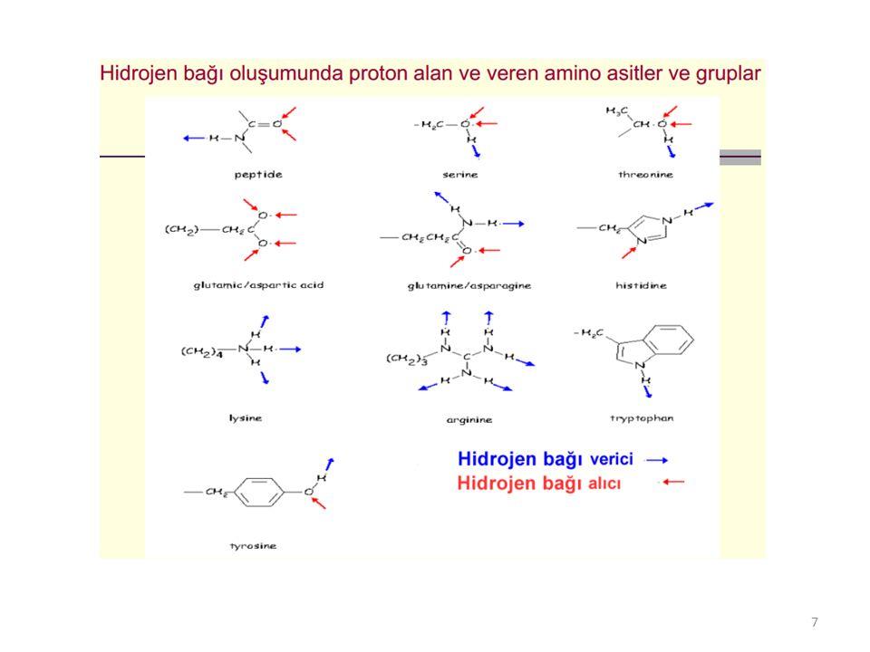 4) İyon bağları: Polipeptit zincirlerindeki asidik ve bazik amino asit kalıntılarının fonksiyonel gruplarının fizyolojik pH'da tamamen veya kısmen iyonlaşmış halde bulunmalarının sonucu olarak, elektrostatik çekim kuvveti ile (COO − ⋅⋅⋅⋅⋅⋅ H 3 N + ) oluşan bağlardır.