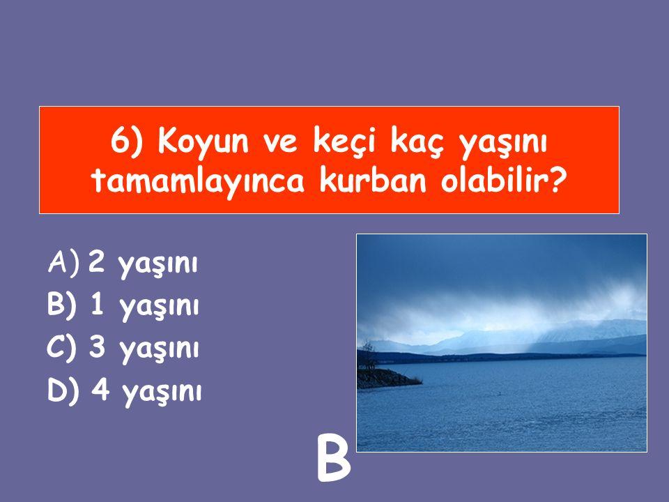 6) Koyun ve keçi kaç yaşını tamamlayınca kurban olabilir? A) 2 yaşını B) 1 yaşını C) 3 yaşını D) 4 yaşını B