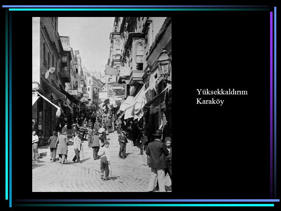 İstanbul'da Köpekler