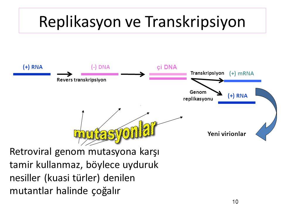 10 (+) RNA(-) DNA çi DNA (+) mRNA (+) RNA Revers transkripsiyon Transkripsiyon Genom replikasyonu Replikasyon ve Transkripsiyon Yeni virionlar Retroviral genom mutasyona karşı tamir kullanmaz, böylece uyduruk nesiller (kuasi türler) denilen mutantlar halinde çoğalır