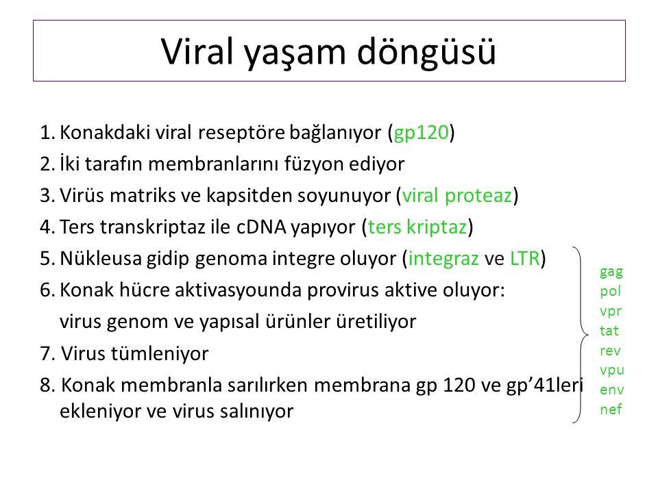 Viral yaşam döngüsü 1.Konakdaki viral reseptöre bağlanıyor (gp120) 2.İki tarafın membranlarını füzyon ediyor 3.Virüs matriks ve kapsitden soyunuyor (viral proteaz) 4.Ters transkriptaz ile cDNA yapıyor (ters kriptaz) 5.Nükleusa gidip genoma integre oluyor (integraz ve LTR) 6.Konak hücre aktivasyounda provirus aktive oluyor: virus genom ve yapısal ürünler üretiliyor 7.