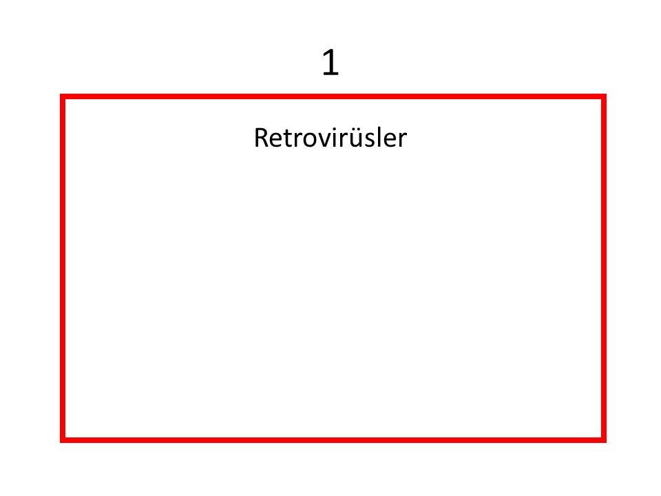 HTLV-1 HTLV-5 Retrovirüsler Retrovirüsler HTLV-2 Lentivirüsler Onkovirüsler Spumavirüs İnsan Köpüksü Virüsü İnsan Plasenta Virüsü Endojen retrovirüsler HIV-2HIV-1 Sarkoma hızlı virüsleri (genelde kuşlarda) Lösemi yavaş virüsleri