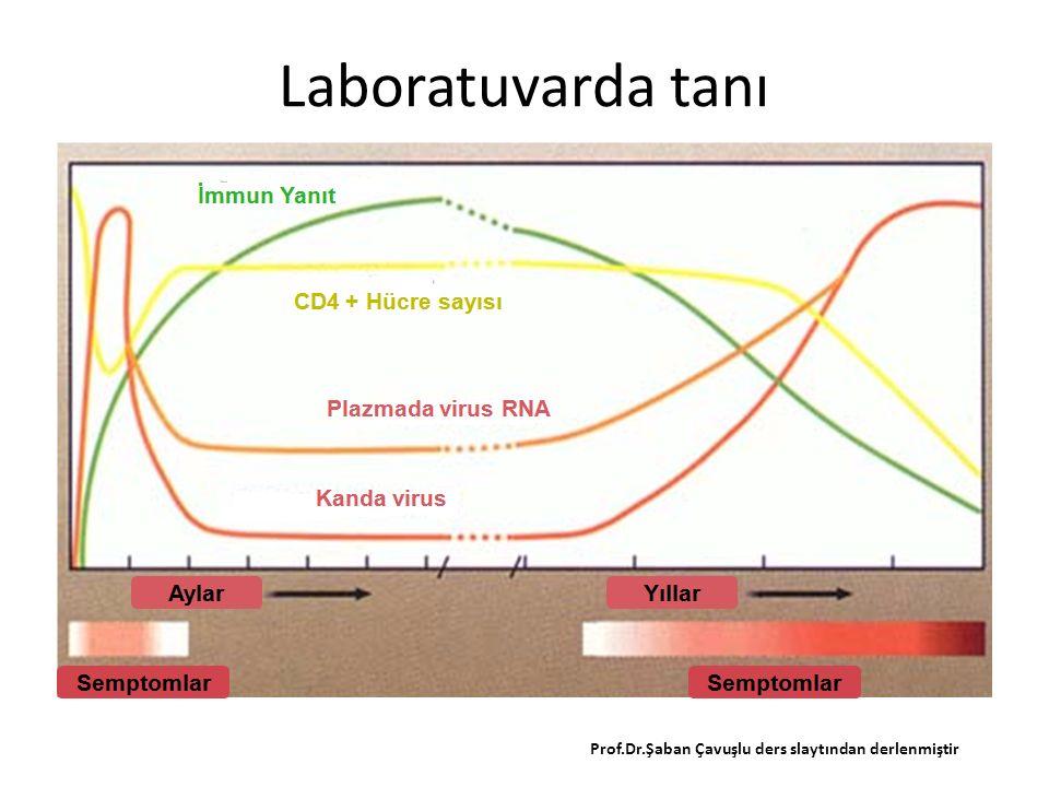 Laboratuvarda tanı Prof.Dr.Şaban Çavuşlu ders slaytından derlenmiştir