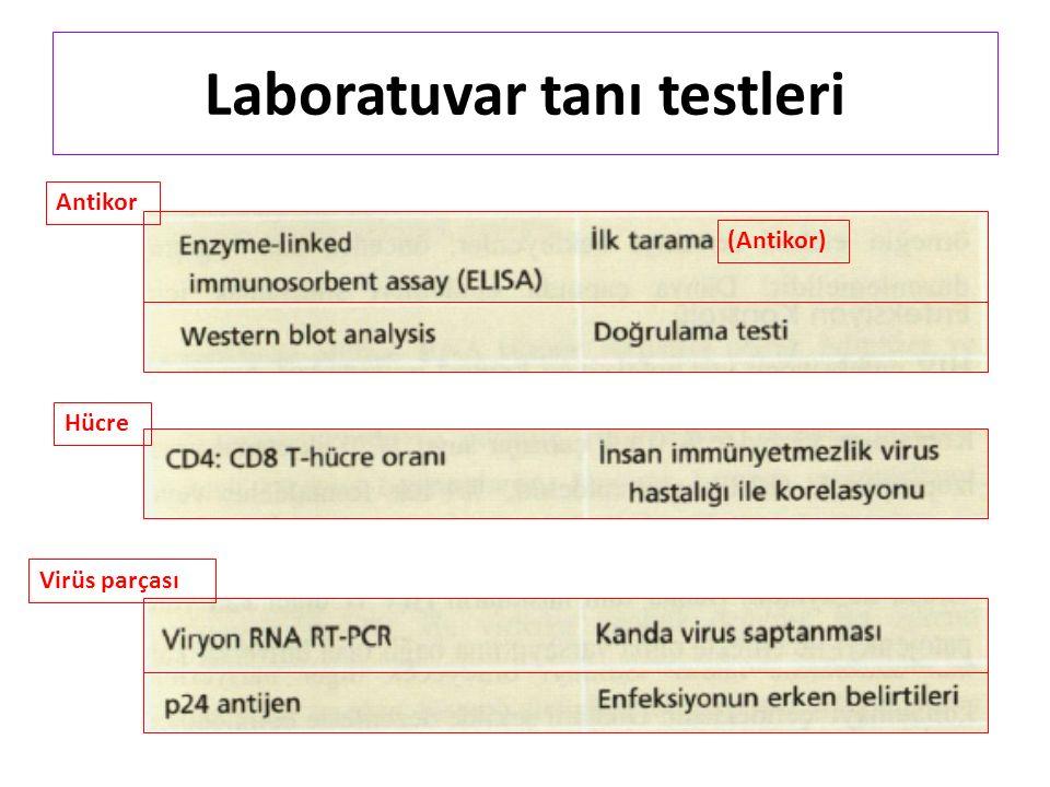 Laboratuvar tanı testleri (Antikor) Antikor Virüs parçası Hücre