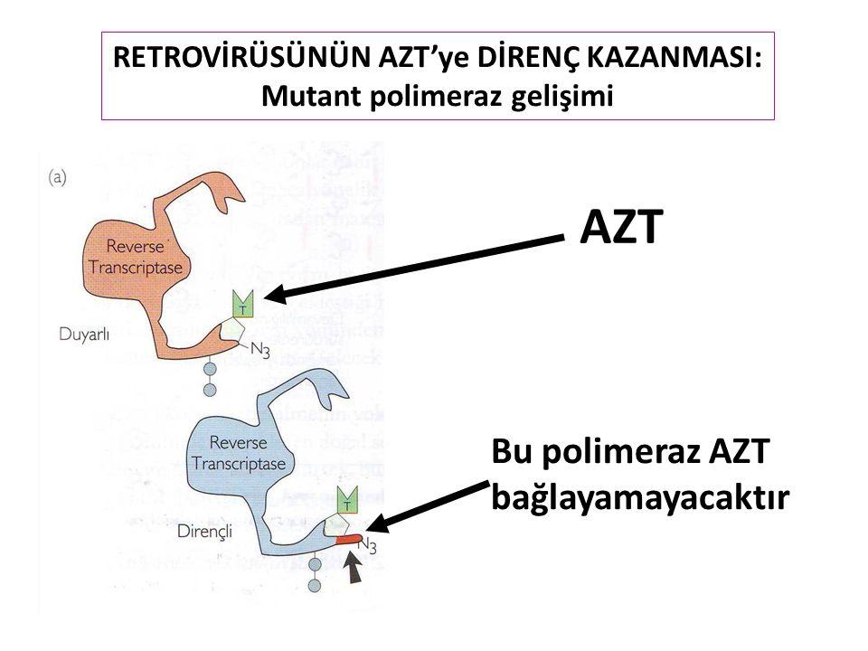 AZT RETROVİRÜSÜNÜN AZT'ye DİRENÇ KAZANMASI: Mutant polimeraz gelişimi Bu polimeraz AZT bağlayamayacaktır