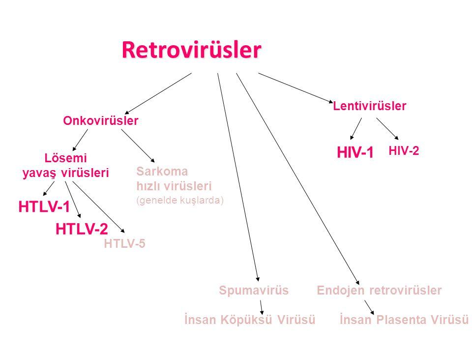 HTLV-1 HTLV-5 Retrovirüsler Retrovirüsler HTLV-2 Lentivirüsler Onkovirüsler Spumavirüs İnsan Köpüksü Virüsü İnsan Plasenta Virüsü Endojen retrovirüsler HIV-2 HIV-1 Sarkoma hızlı virüsleri (genelde kuşlarda) Lösemi yavaş virüsleri