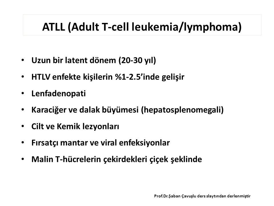 ATLL (Adult T-cell leukemia/lymphoma) Uzun bir latent dönem (20-30 yıl) HTLV enfekte kişilerin %1-2.5'inde gelişir Lenfadenopati Karaciğer ve dalak büyümesi (hepatosplenomegali) Cilt ve Kemik lezyonları Fırsatçı mantar ve viral enfeksiyonlar Malin T-hücrelerin çekirdekleri çiçek şeklinde Prof.Dr.Şaban Çavuşlu ders slaytından derlenmiştir