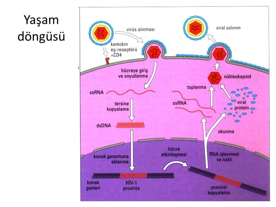 Bağışıklık sisteminin bozulması