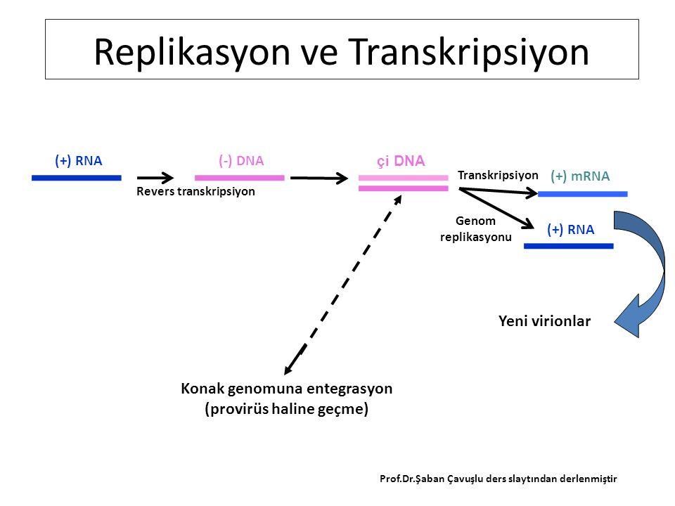 RETROVİRÜSÜNÜN kendi ters transkriptazı ile genomunu çift iplikli hale çevirmesi