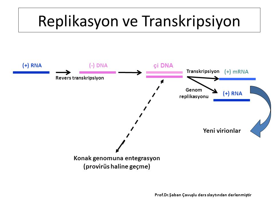 (+) RNA(-) DNA çi DNA (+) mRNA (+) RNA Revers transkripsiyon Transkripsiyon Genom replikasyonu Replikasyon ve Transkripsiyon Yeni virionlar Konak genomuna entegrasyon (provirüs haline geçme) Prof.Dr.Şaban Çavuşlu ders slaytından derlenmiştir