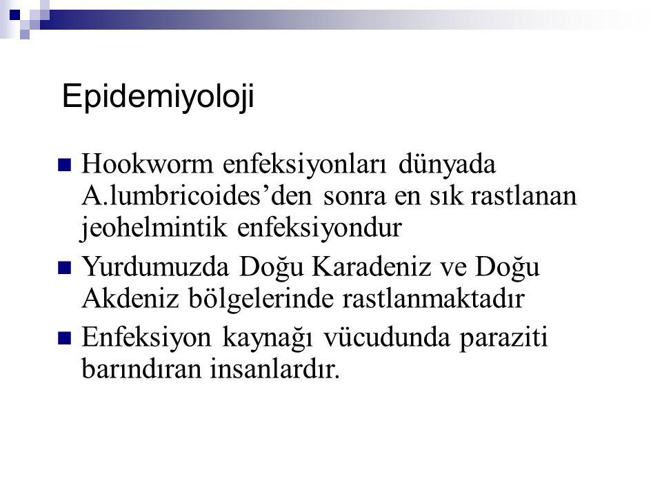 Epidemiyoloji Hookworm enfeksiyonları dünyada A.lumbricoides'den sonra en sık rastlanan jeohelmintik enfeksiyondur Yurdumuzda Doğu Karadeniz ve Doğu A