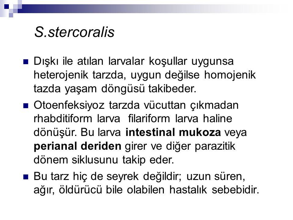 S.stercoralis Dışkı ile atılan larvalar koşullar uygunsa heterojenik tarzda, uygun değilse homojenik tazda yaşam döngüsü takibeder. Otoenfeksiyoz tarz
