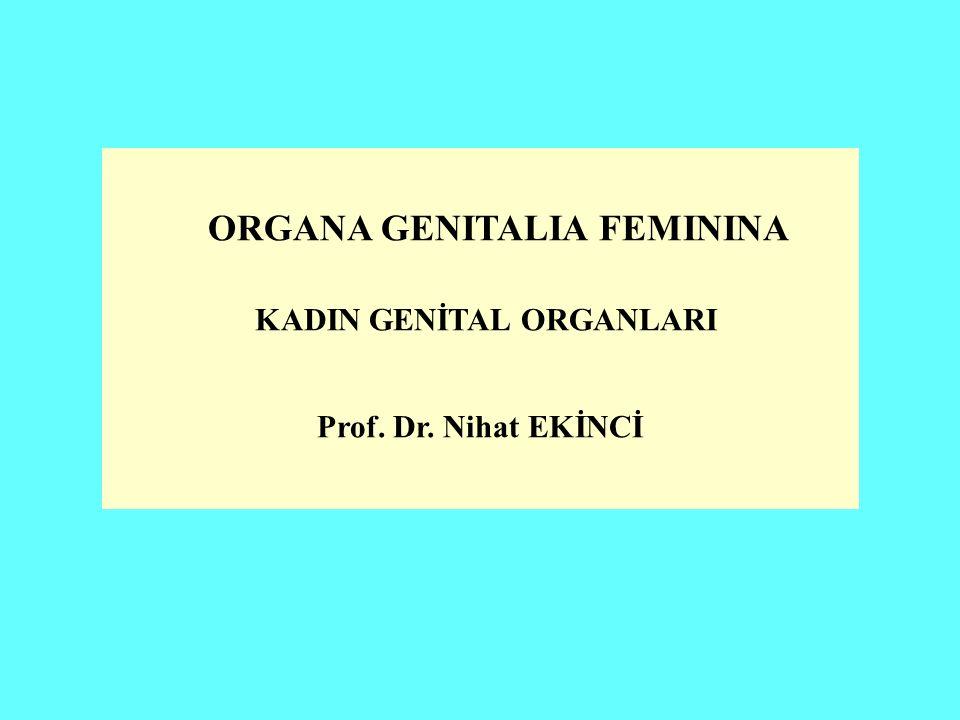 ORGANA GENITALIA FEMININA KADIN GENİTAL ORGANLARI Prof. Dr. Nihat EKİNCİ