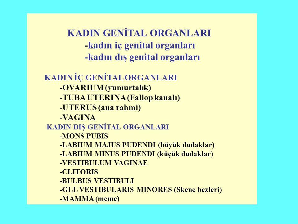 KADIN GENİTAL ORGANLARI -kadın iç genital organları -kadın dış genital organları KADIN İÇ GENİTAL ORGANLARI -OVARIUM (yumurtalık) -TUBA UTERINA (Fallop kanalı) -UTERUS (ana rahmi) -VAGINA KADIN DIŞ GENİTAL ORGANLARI -MONS PUBIS -LABIUM MAJUS PUDENDI (büyük dudaklar) -LABIUM MINUS PUDENDI (küçük dudaklar) -VESTIBULUM VAGINAE -CLITORIS -BULBUS VESTIBULI -GLL VESTIBULARIS MINORES (Skene bezleri) -MAMMA (meme)