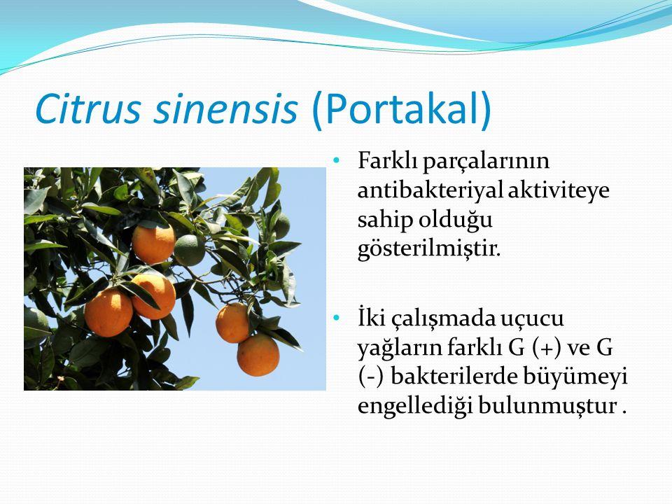 Citrus sinensis (Portakal) Farklı parçalarının antibakteriyal aktiviteye sahip olduğu gösterilmiştir.