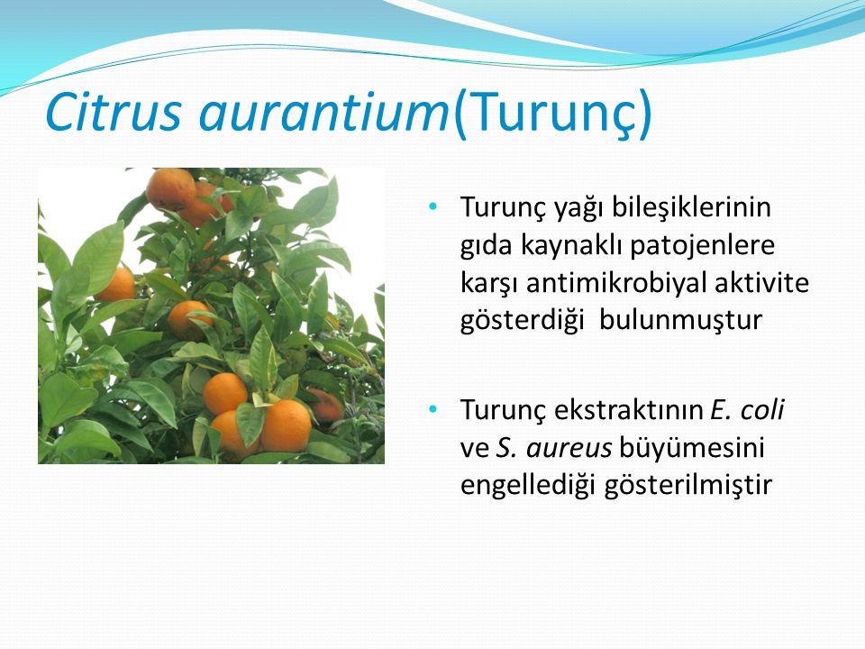 Citrus aurantium(Turunç) Turunç yağı bileşiklerinin gıda kaynaklı patojenlere karşı antimikrobiyal aktivite gösterdiği bulunmuştur Turunç ekstraktının E.