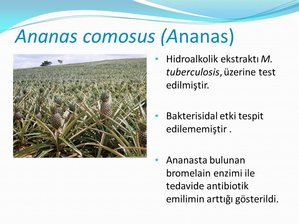 Ananas comosus (Ananas) Hidroalkolik ekstraktı M. tuberculosis, üzerine test edilmiştir.
