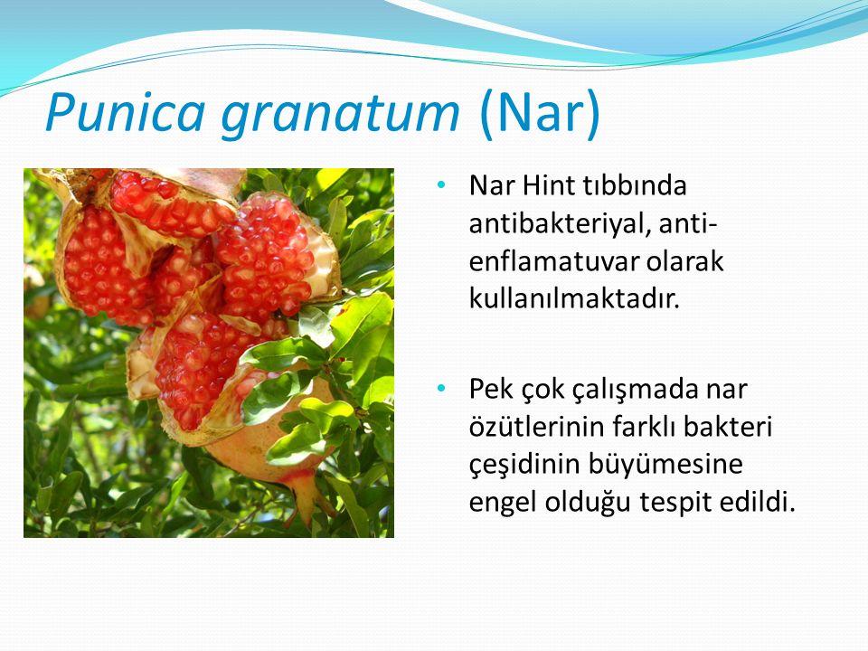 Punica granatum (Nar) Nar Hint tıbbında antibakteriyal, anti- enflamatuvar olarak kullanılmaktadır.