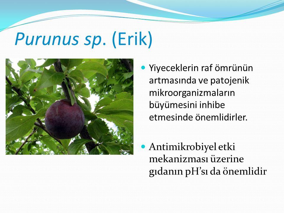 Purunus sp.