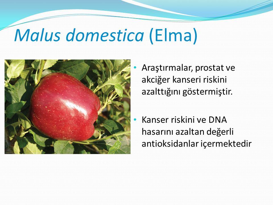 Malus domestica (Elma) Araştırmalar, prostat ve akciğer kanseri riskini azalttığını göstermiştir.