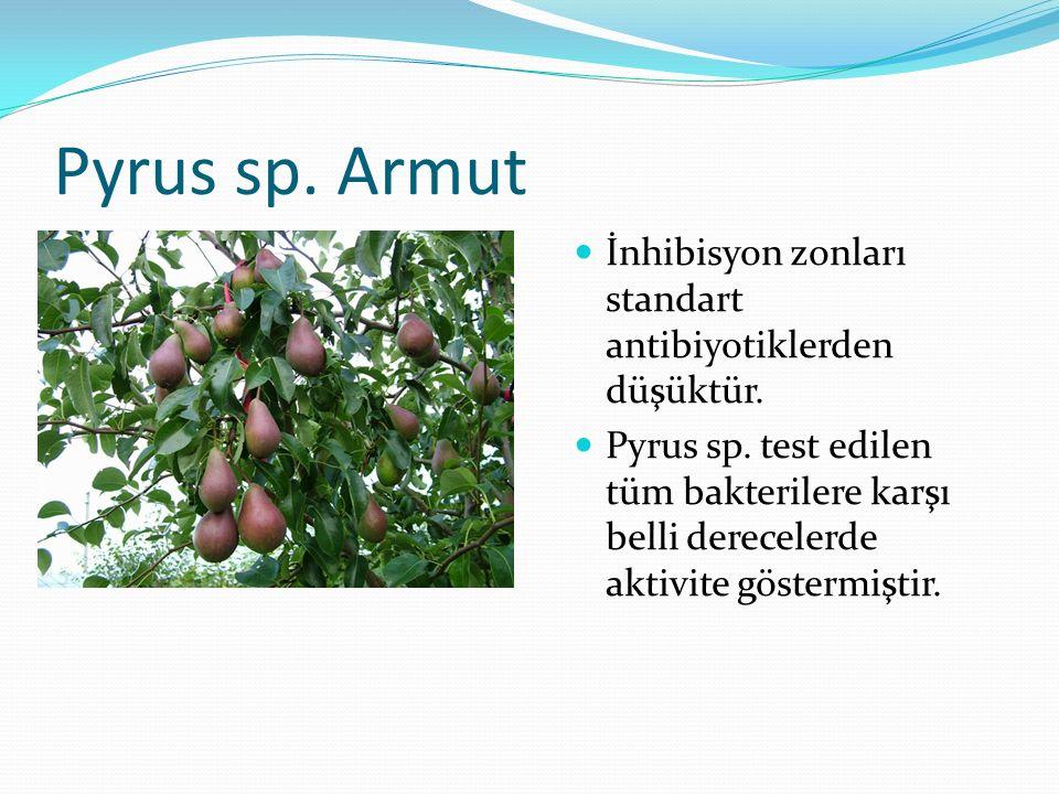 Pyrus sp. Armut İnhibisyon zonları standart antibiyotiklerden düşüktür.