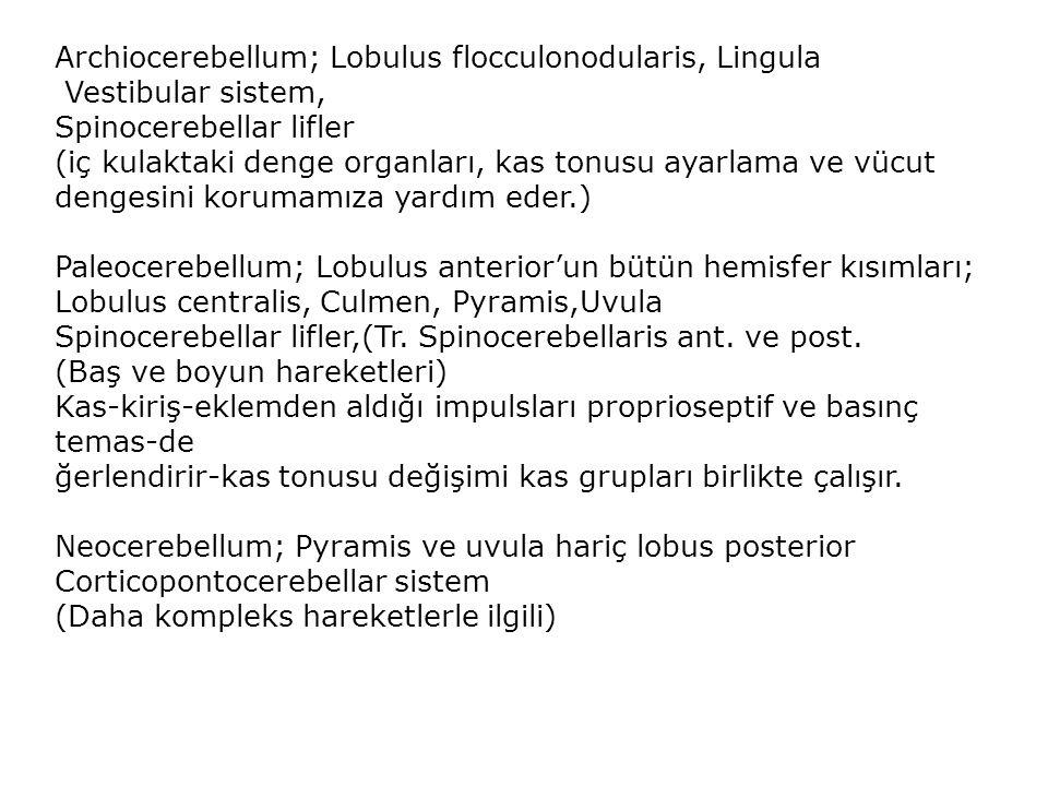 Archiocerebellum; Lobulus flocculonodularis, Lingula Vestibular sistem, Spinocerebellar lifler (iç kulaktaki denge organları, kas tonusu ayarlama ve v