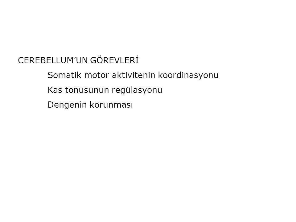 CEREBELLUM'UN GÖREVLERİ Somatik motor aktivitenin koordinasyonu Kas tonusunun regülasyonu Dengenin korunması