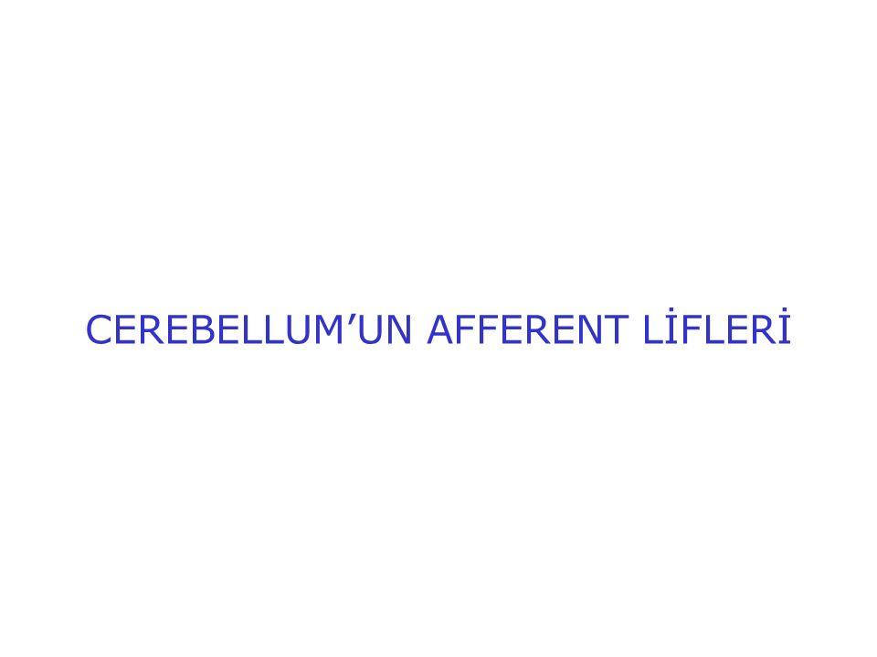 CEREBELLUM'UN AFFERENT LİFLERİ