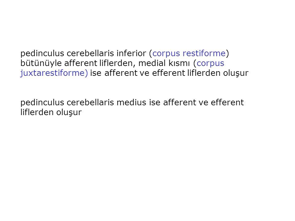 pedinculus cerebellaris inferior (corpus restiforme) bütünüyle afferent liflerden, medial kısmı (corpus juxtarestiforme) ise afferent ve efferent lifl