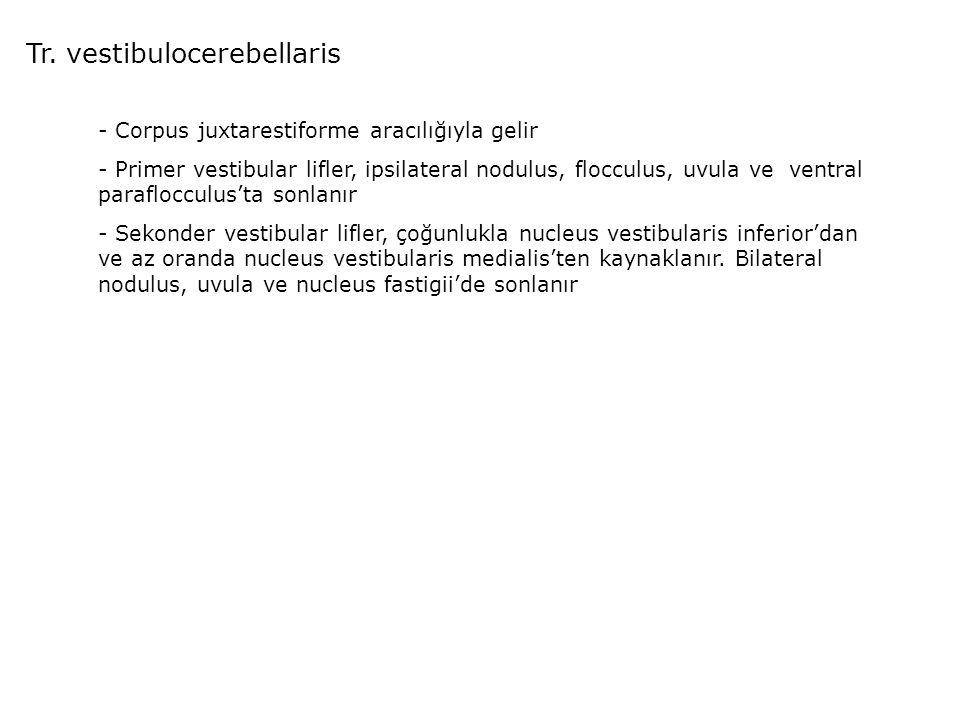 Tr. vestibulocerebellaris - Corpus juxtarestiforme aracılığıyla gelir - Primer vestibular lifler, ipsilateral nodulus, flocculus, uvula ve ventral par