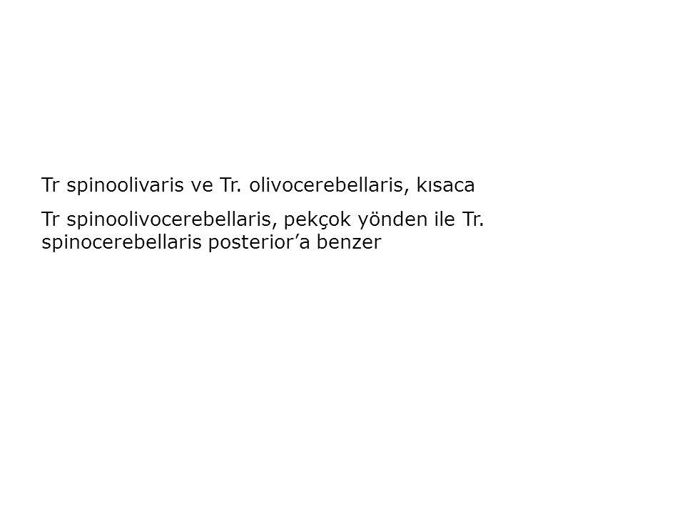 Tr spinoolivaris ve Tr. olivocerebellaris, kısaca Tr spinoolivocerebellaris, pekçok yönden ile Tr. spinocerebellaris posterior'a benzer