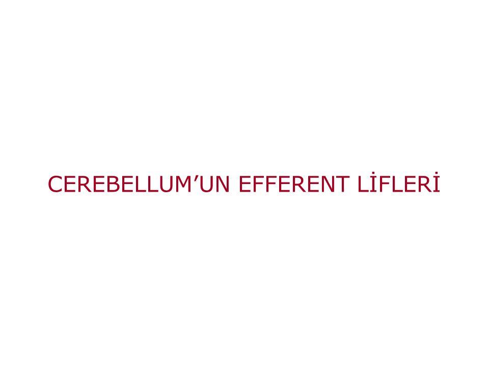 CEREBELLUM'UN EFFERENT LİFLERİ