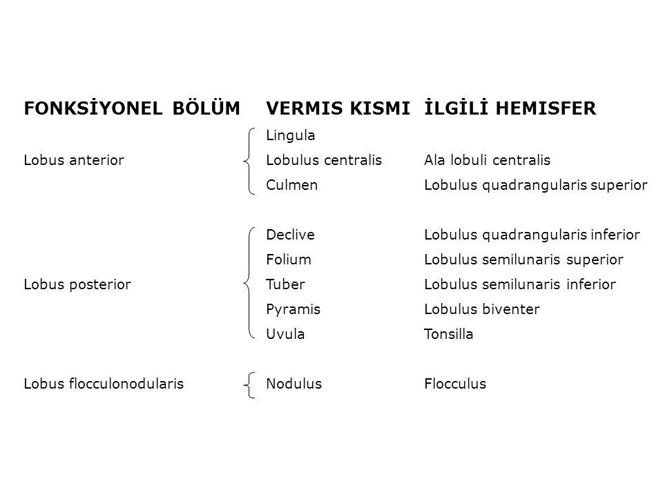 FONKSİYONEL BÖLÜMVERMIS KISMIİLGİLİ HEMISFER Lingula Lobus anteriorLobulus centralisAla lobuli centralis CulmenLobulus quadrangularis superior Declive