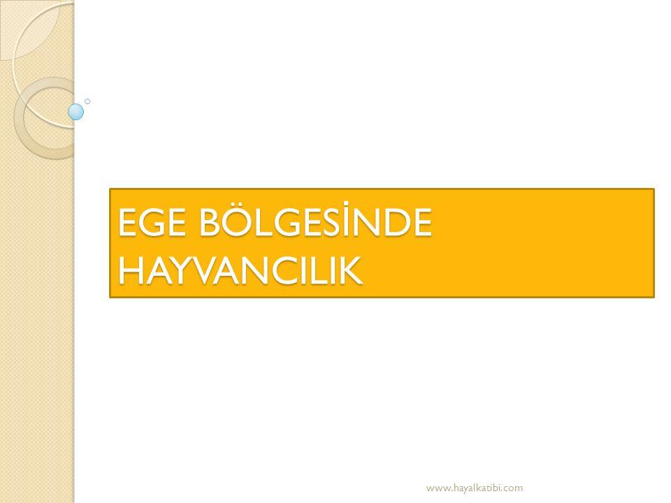 EGE BÖLGES İ NDE HAYVANCILIK www.hayalkatibi.com