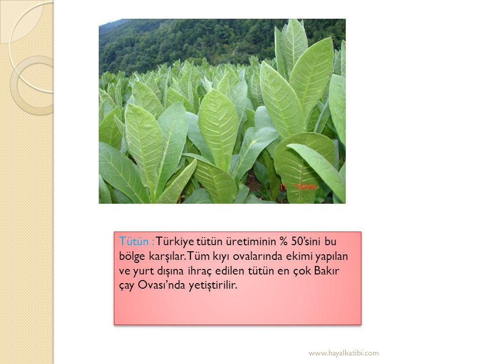 Zeytin : Akdeniz ikliminin tanıtıcı kültür bitkisi olan zeytin en çok Ege Bölgesi'nde yetiştirilir.