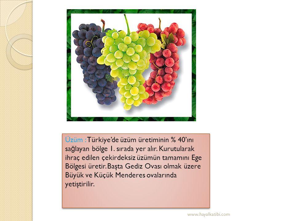 İ ncir : Kış ılıklı ğ ı isteyen ve Akdeniz iklimine uyumlu olan incirin %82'si bu bölgede yetiştirilir.