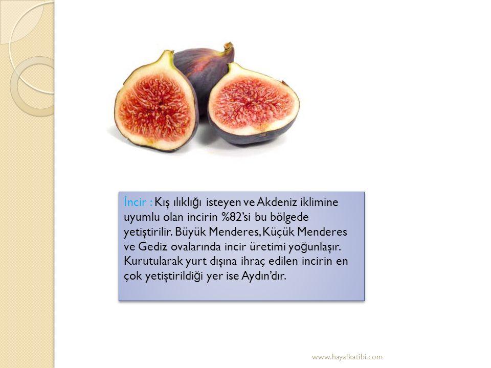 Pamuk : Akdeniz iklimine uyumlu oldu ğ undan kıyı ovalarında ekimi yapılır.