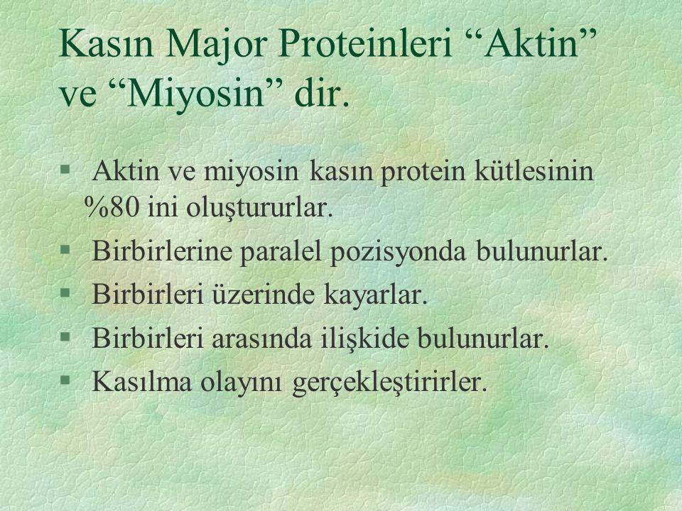 Kasın Major Proteinleri Aktin ve Miyosin dir.