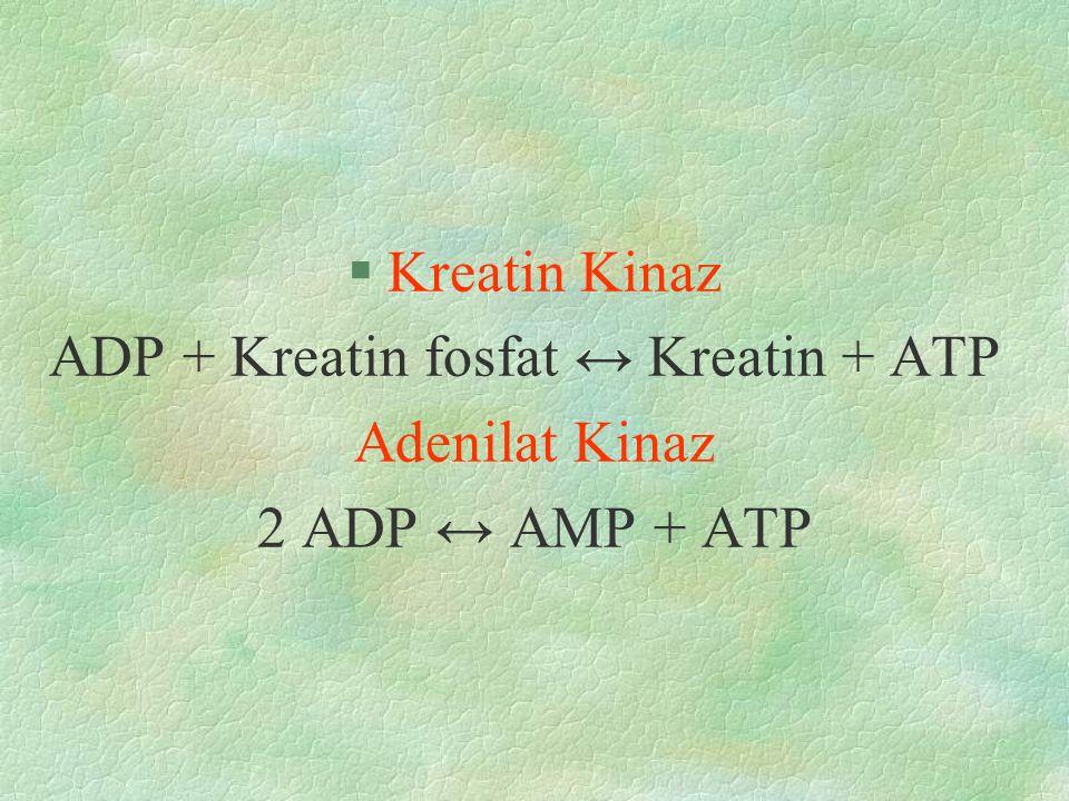 §Kreatin Kinaz ADP + Kreatin fosfat ↔ Kreatin + ATP Adenilat Kinaz 2 ADP ↔ AMP + ATP