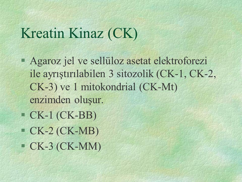 Kreatin Kinaz (CK) §Agaroz jel ve sellüloz asetat elektroforezi ile ayrıştırılabilen 3 sitozolik (CK-1, CK-2, CK-3) ve 1 mitokondrial (CK-Mt) enzimden oluşur.