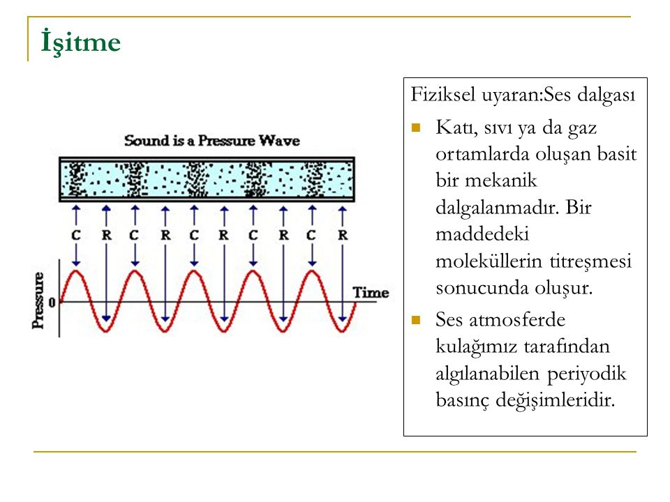 İşitme Fiziksel uyaran:Ses dalgası Katı, sıvı ya da gaz ortamlarda oluşan basit bir mekanik dalgalanmadır. Bir maddedeki moleküllerin titreşmesi sonuc