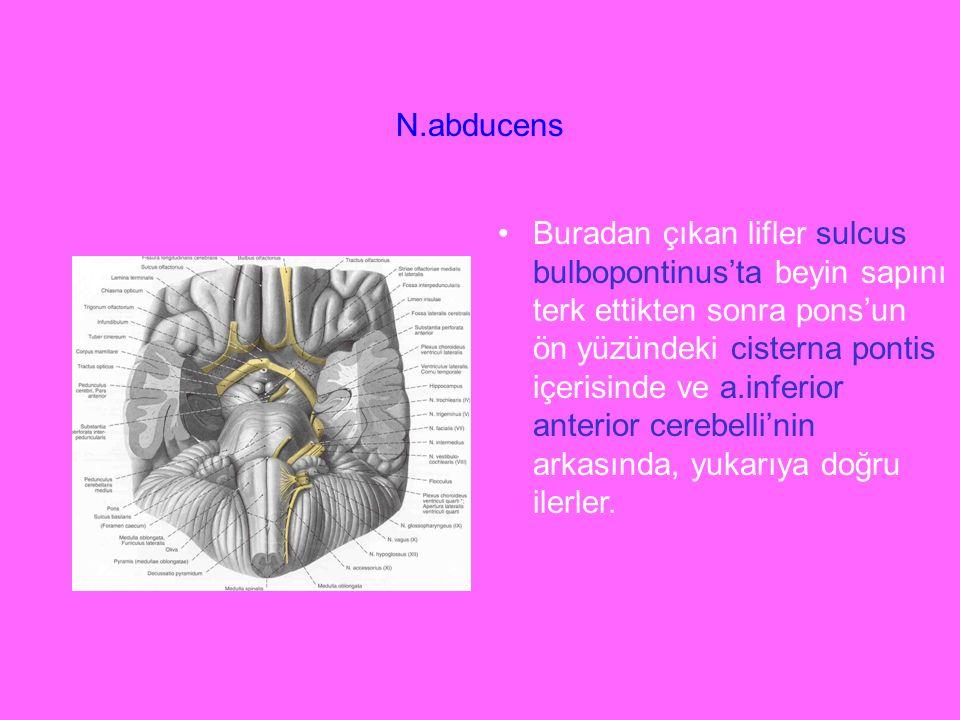 N.abducens Buradan çıkan lifler sulcus bulbopontinus'ta beyin sapını terk ettikten sonra pons'un ön yüzündeki cisterna pontis içerisinde ve a.inferior