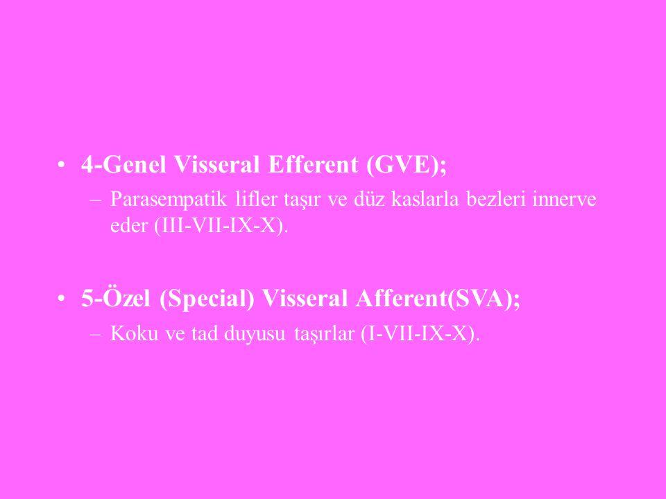 4-Genel Visseral Efferent (GVE); –Parasempatik lifler taşır ve düz kaslarla bezleri innerve eder (III-VII-IX-X). 5-Özel (Special) Visseral Afferent(SV