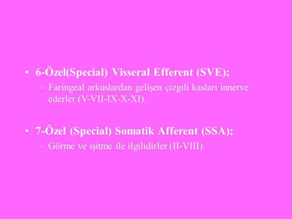 6-Özel(Special) Visseral Efferent (SVE); –Faringeal arkuslardan gelişen çizgili kasları innerve ederler (V-VII-IX-X-XI). 7-Özel (Special) Somatik Affe